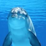 Foto mit Unterwasserkamera